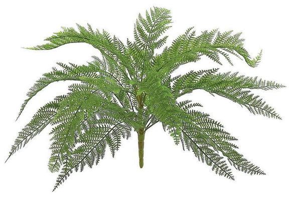 FRESH NARROW FERN BUSH