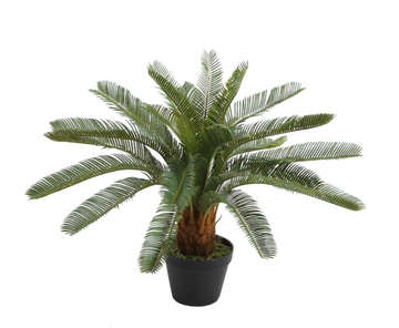 Faux Cycas w/ Black Pot - Grn