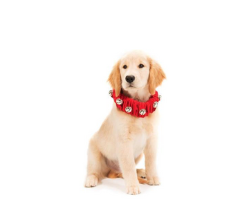 Jingle Bell Collar - Red - Multiple Sizes