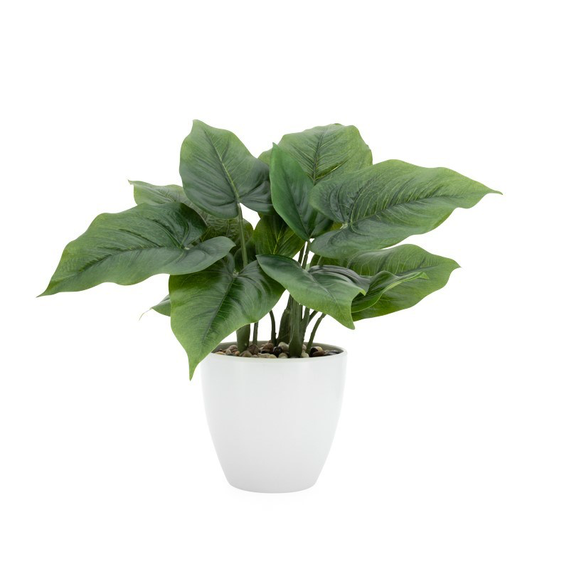 "Load image into Gallery viewer, Villa Potted Plant - 12"" Calla"