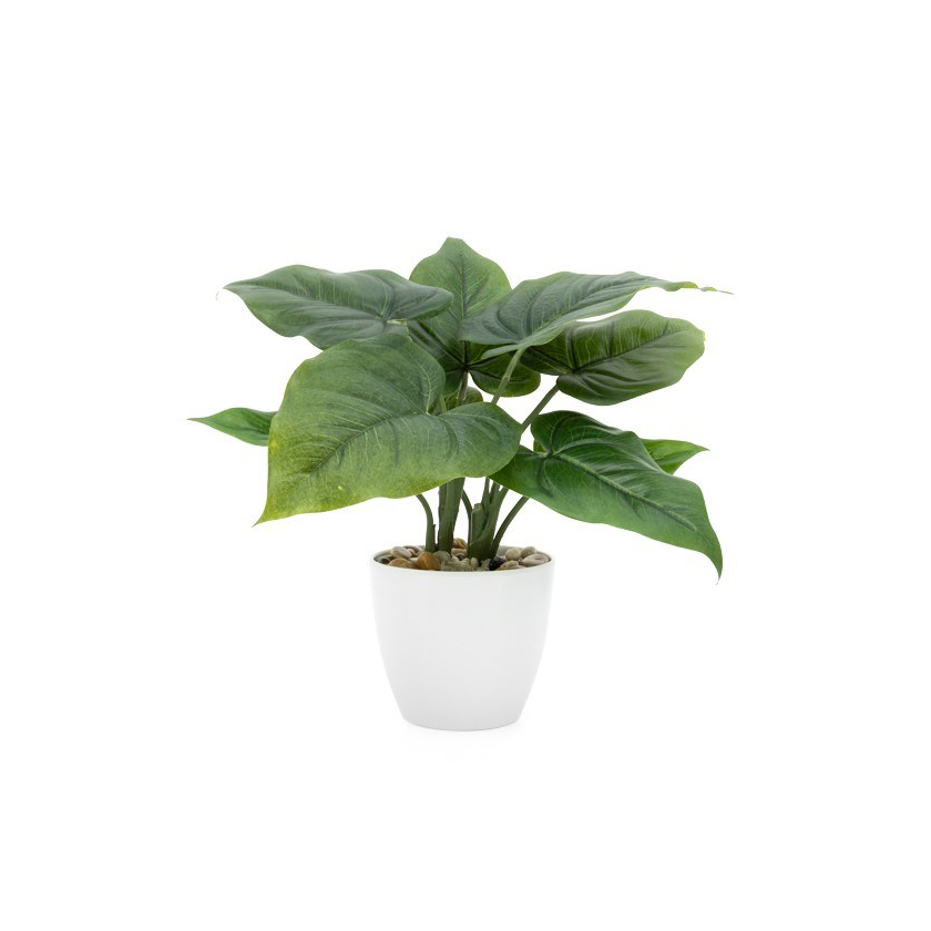 "Load image into Gallery viewer, Villa Potted Plant - 10"" Calla"