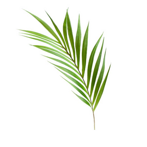 "Load image into Gallery viewer, 36"" Palm Leaf Stem"
