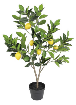 Load image into Gallery viewer, 5' Fruiting Lemon Tree In Pot