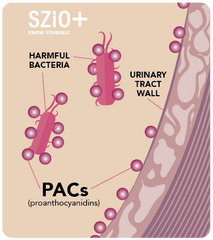 How PACs can help prevent UTIsUtiva, by Szio+, UTI Prevention Supplement  - how it works