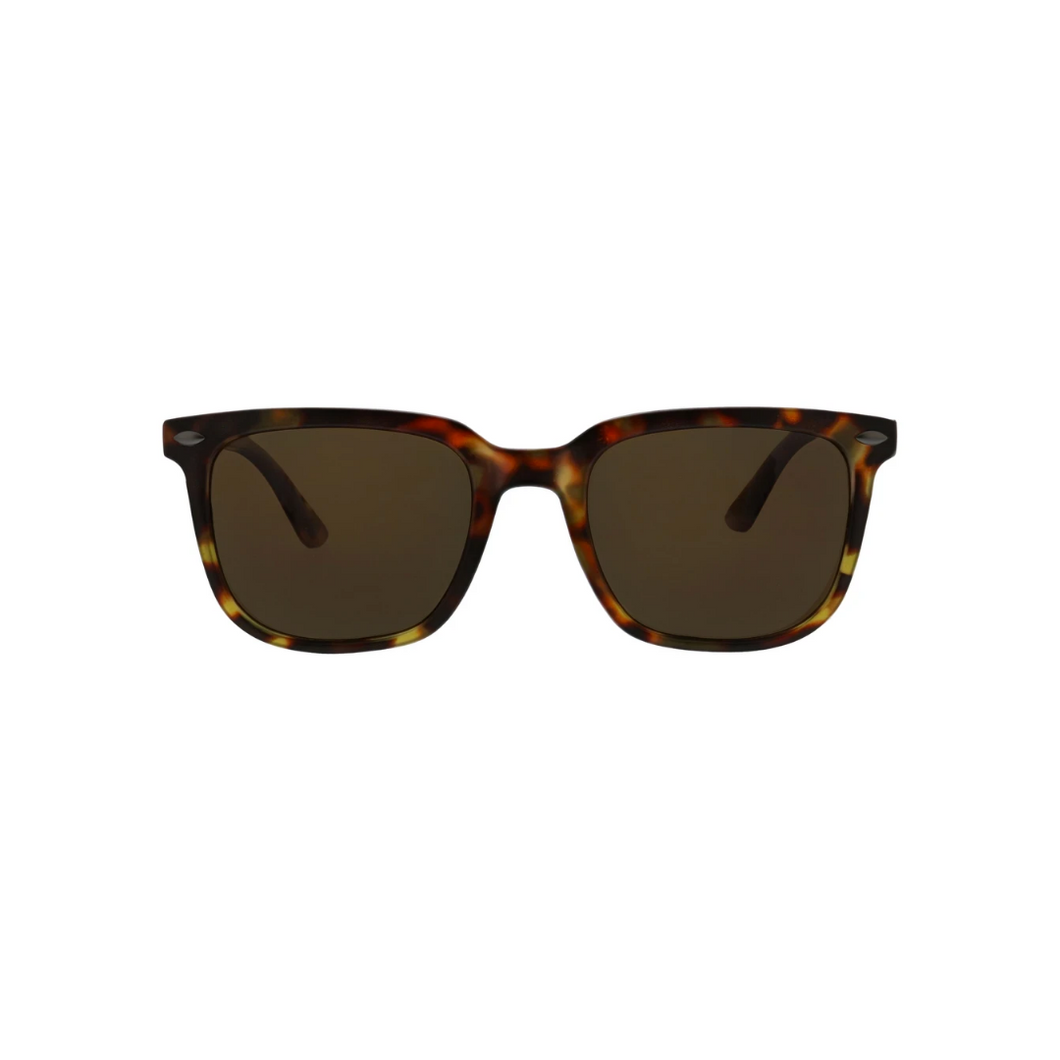 CRUZ SUNGLASSES tortoise front