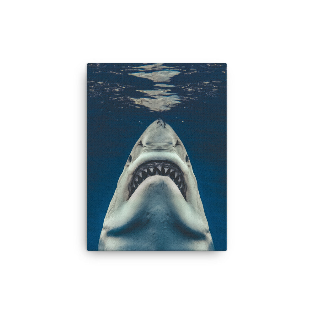 Jaws - Canvas