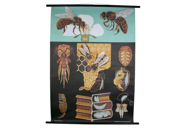 Honey Bee Scientific Botanical Wall Chart