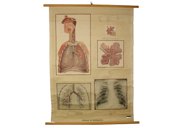 Vintage Science Wall Chart - respiratory system