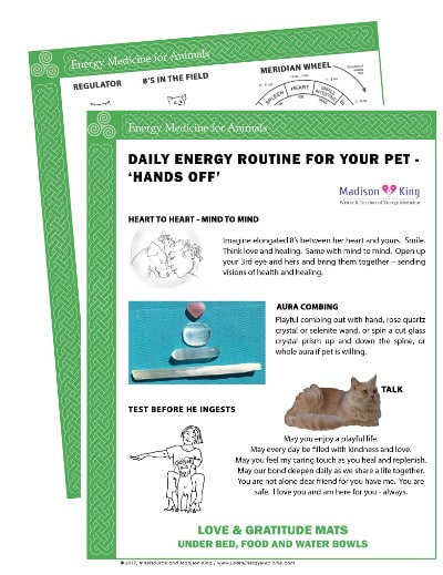 Daily Energy Routine for Animals - Hands off