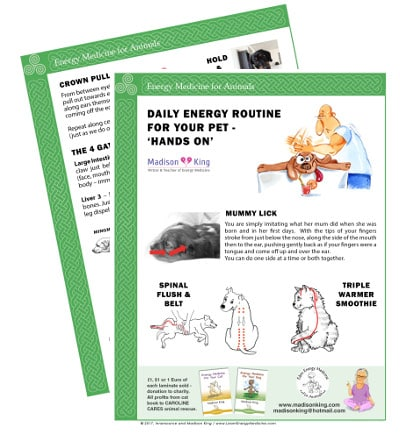 Daily Energy Routine for Animals - Hands On