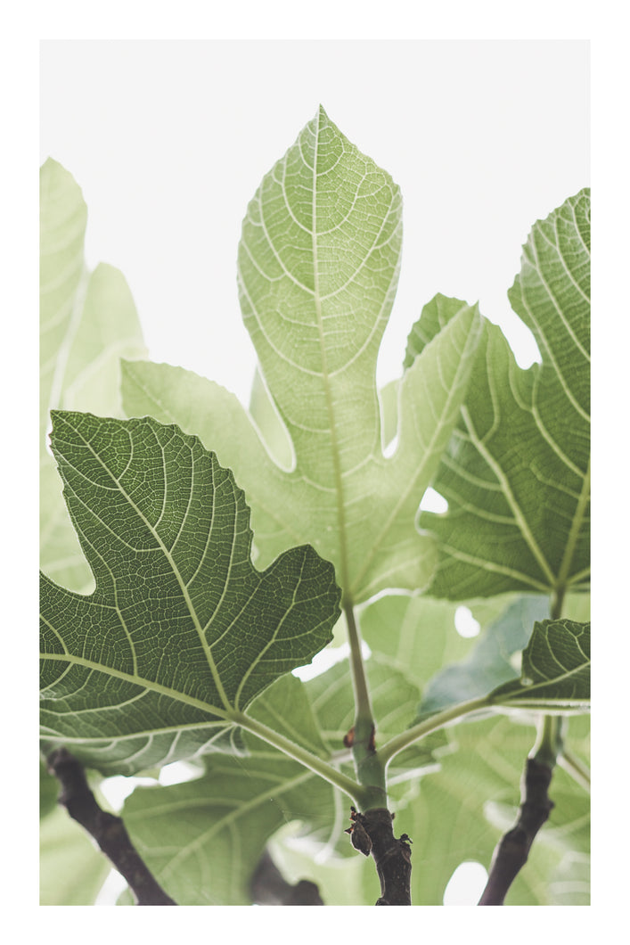 Card: Luminous Fig Leaves (set of 5)