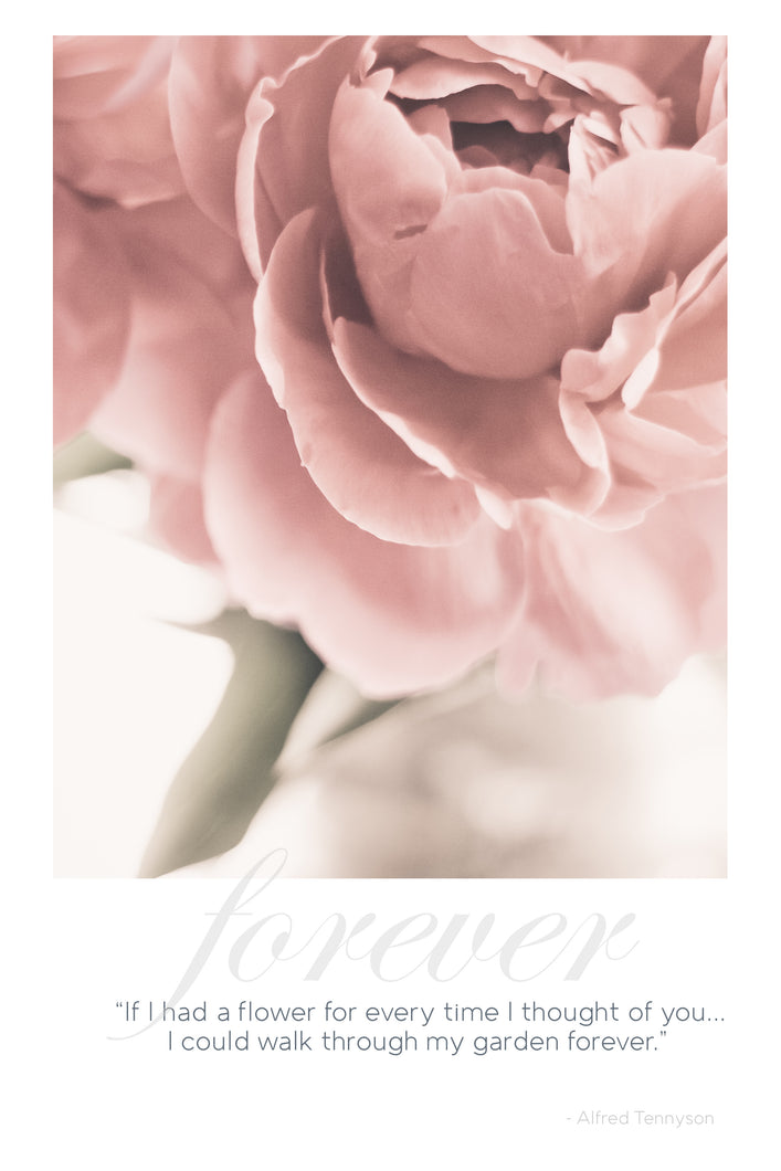 Card: Peony - Forever Garden - Tennyson (set of 5)