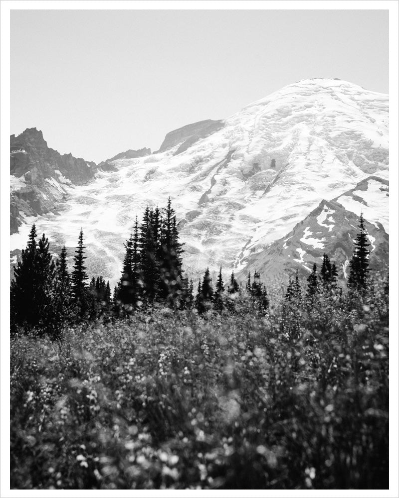 Mount Rainier in Bloom