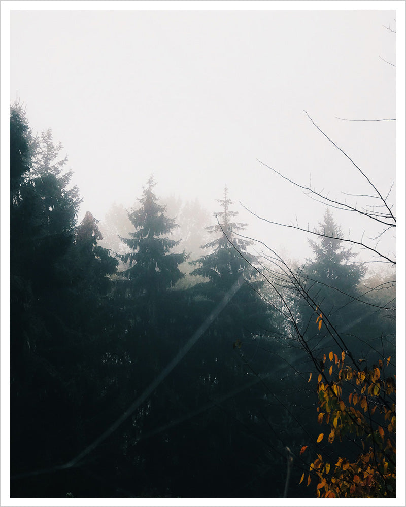 PNW Trees - Autumn Fog
