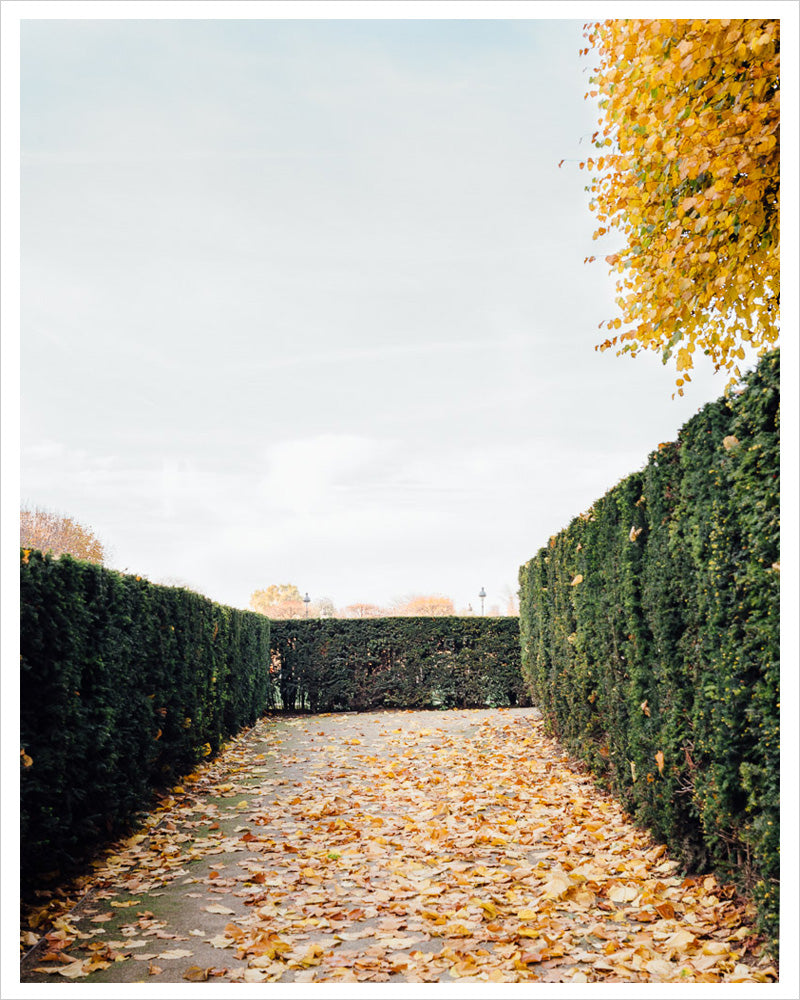 Autumnal Path - Paris