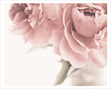 Load image into Gallery viewer, Dreaming of Peonies