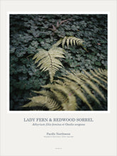 Load image into Gallery viewer, Art Pint Poster: Lady Fern & Redwood Sorrel