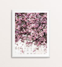 Load image into Gallery viewer, Swaths of Cherry Blossoms