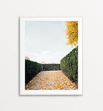 Load image into Gallery viewer, Autumnal Path - Paris