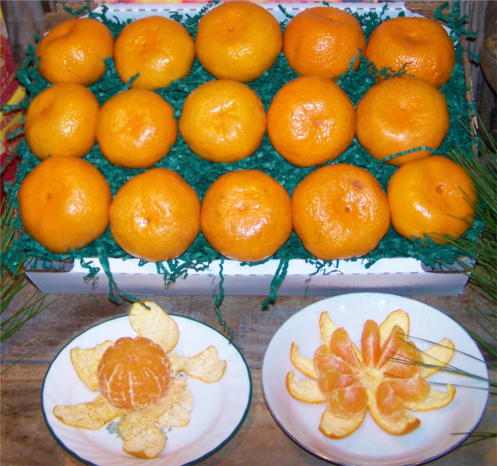 The Fruit Factory Satsumas Box