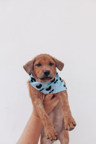 Rescue Pup in The Paws Bandana
