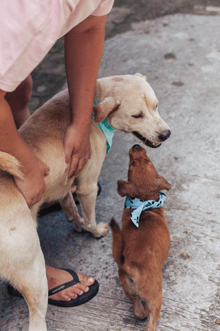 Rescue Dog & Pup in Bali