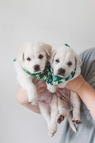 Hope For Bali Dogs - Rescue Pups