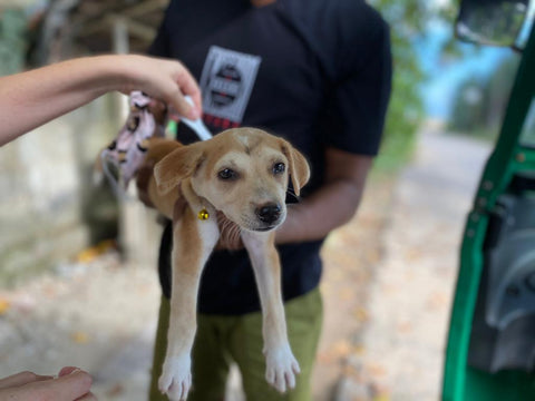 Mission for Dogs In Need VIII