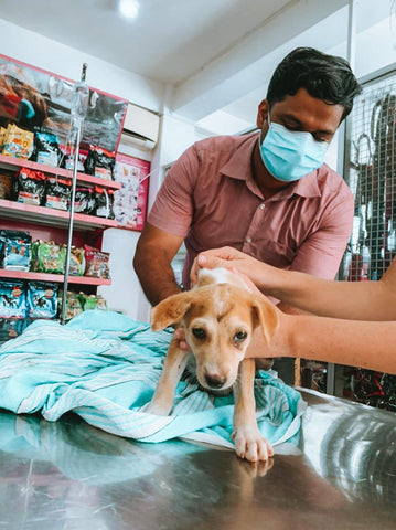 Mission for Dogs In Need VI