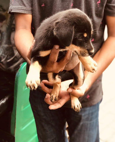 Puppies In Need - The Paws Mission 10