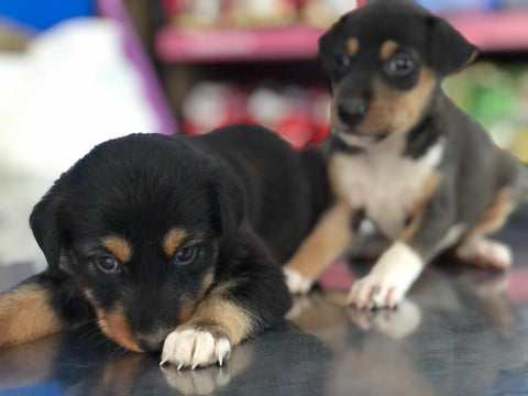 Puppies In Need - The Paws Mission 7
