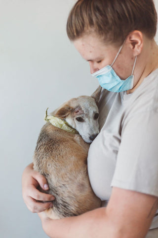 Rescued Bali Pup - Hope For Bali Dogs II