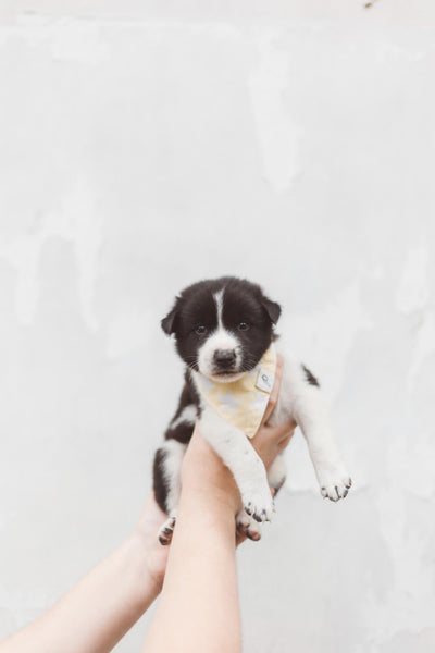 Rescued Pup Four - The Paws Mission