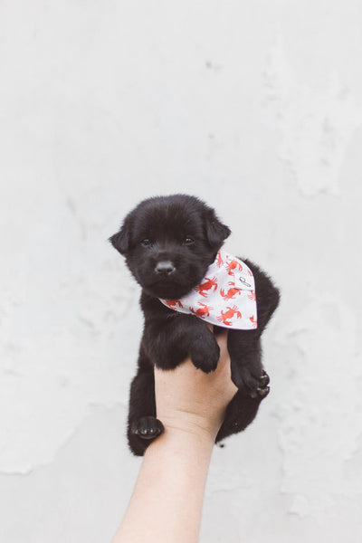 Rescued Pup One - The Paws Mission