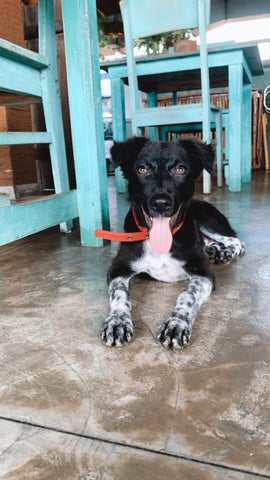Rio out and about in Sri Lanka - The Paws