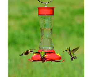 PERK PET BIRD FEEDER HUMMINGBIRD GLASS 16 OZ