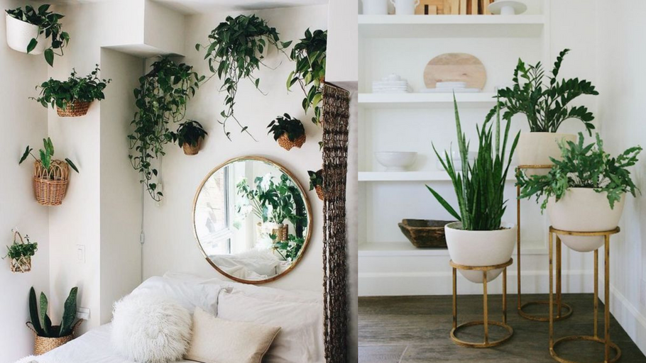 The Full Guide to: House Plant Styling