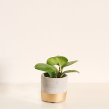 Load image into Gallery viewer, Mini Gold Dipped Cement Planter
