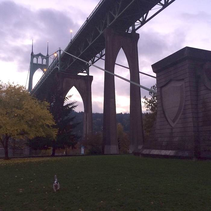 A beautiful scene under the St. Johns bridge at Cathedral Park in Portland.