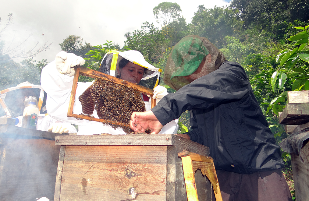 Guatemala Bee Project