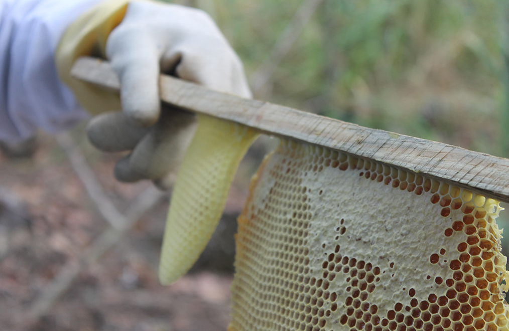 A honeycomb - Guatemala Bee Project