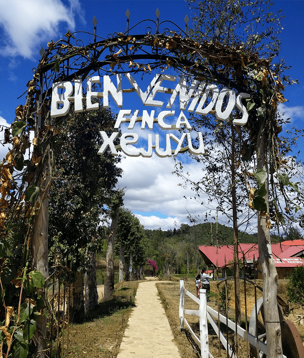 Welcome to Finca Xejuyu, Union Coffee