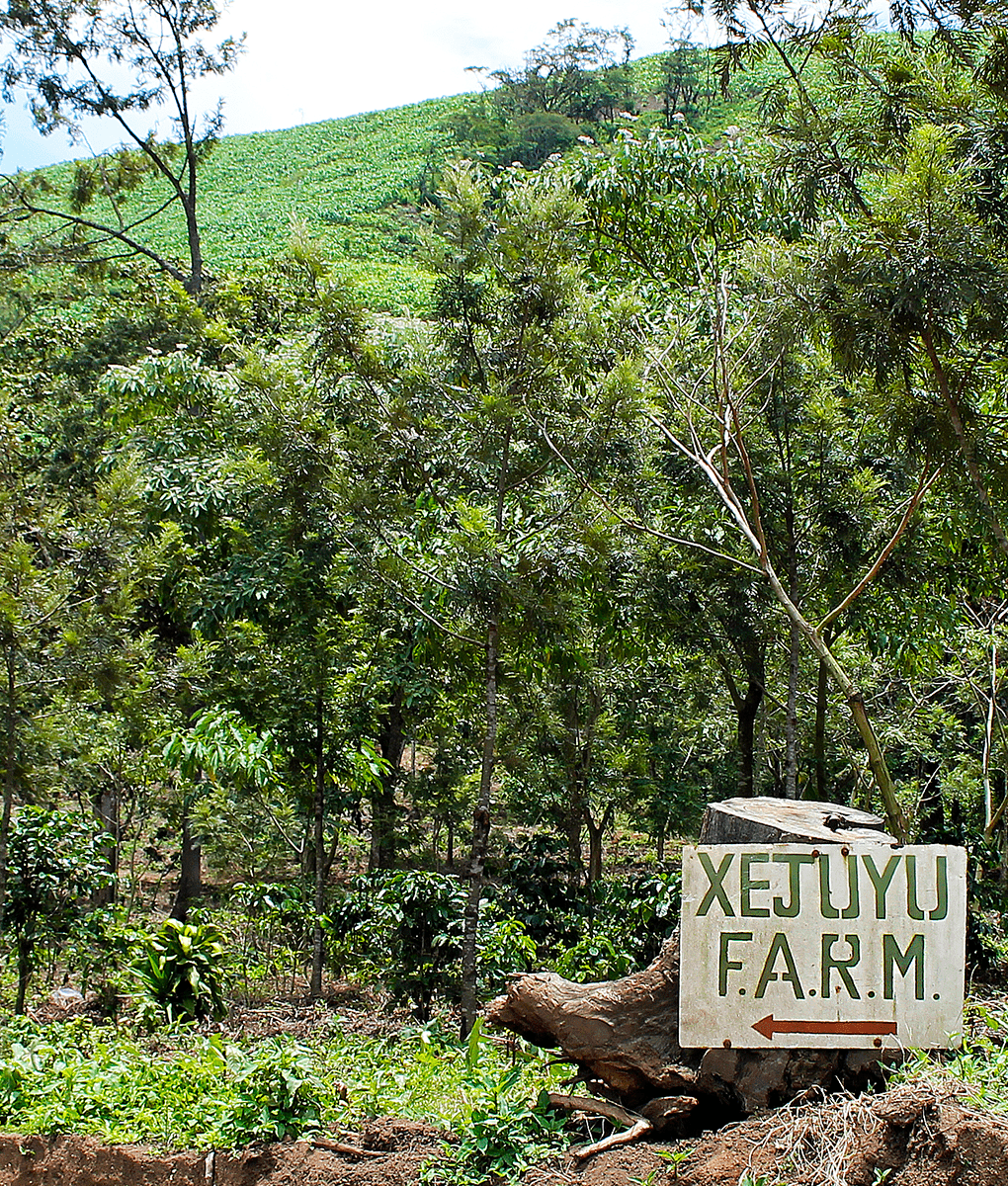 Sign post for Xejuyu Coffee Farm, Guatemala, Union Coffee