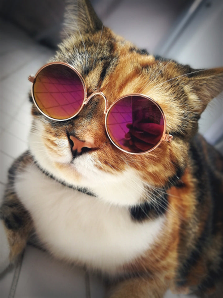 Kitty Hippie Sunglasses - Critters Outfitters