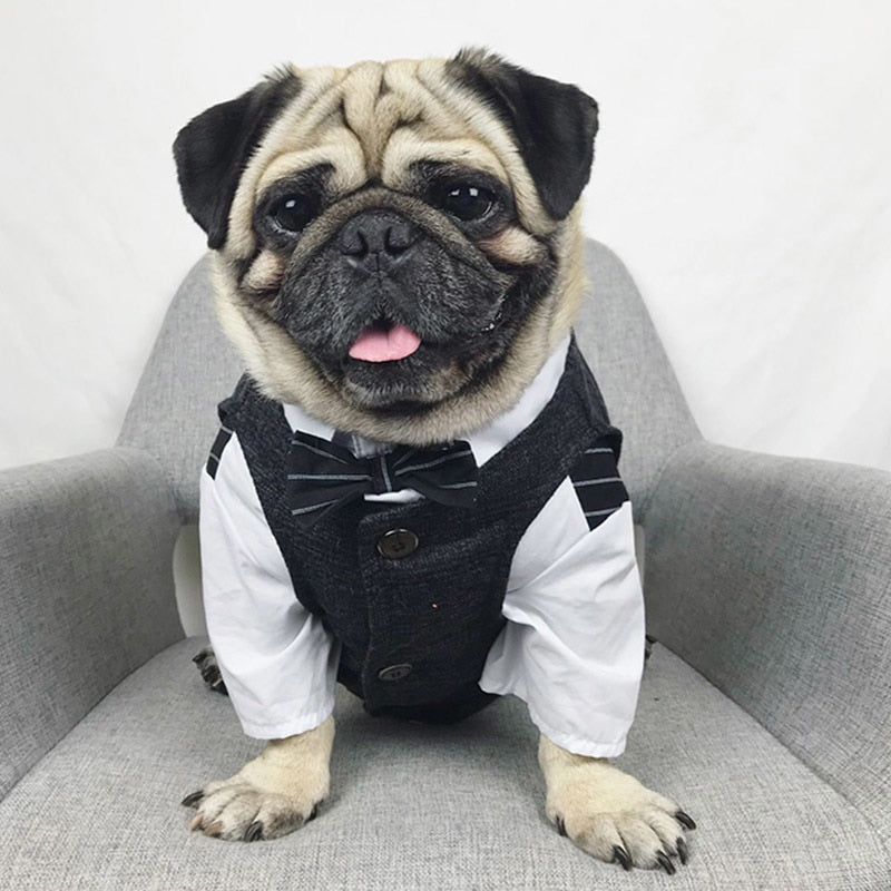 Formal Dog Suit - Critters Outfitters