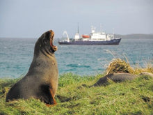 Galapagos of the Southern Ocean