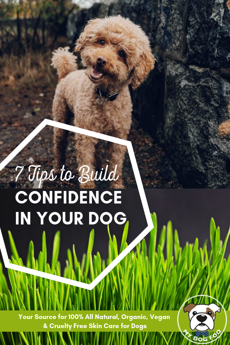 7 Steps To Build Confidence In Your Dog