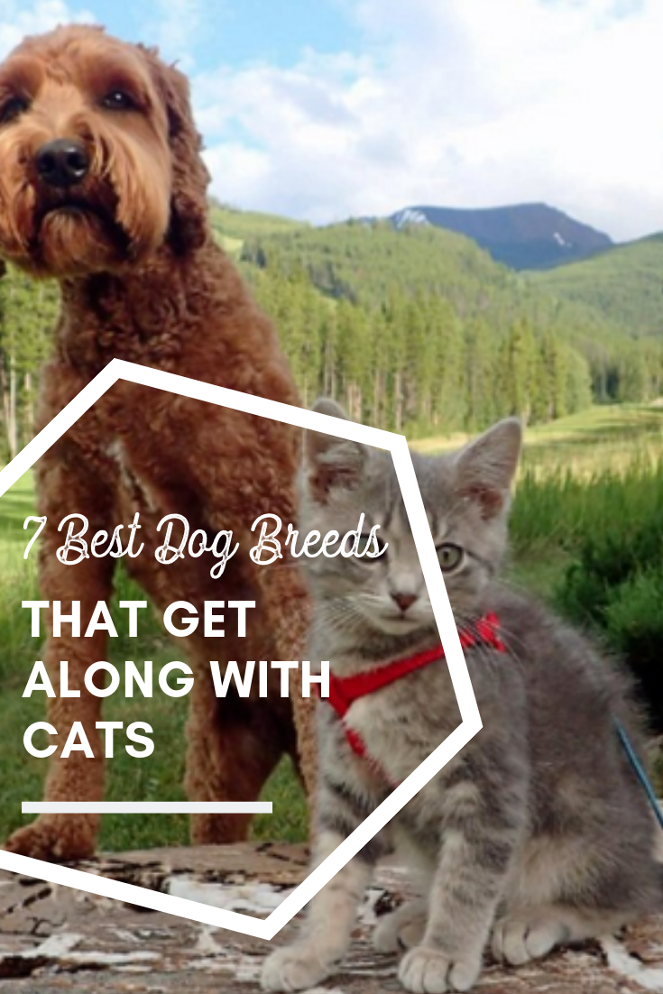 7 Best Dog Breeds That Get Along With Cats