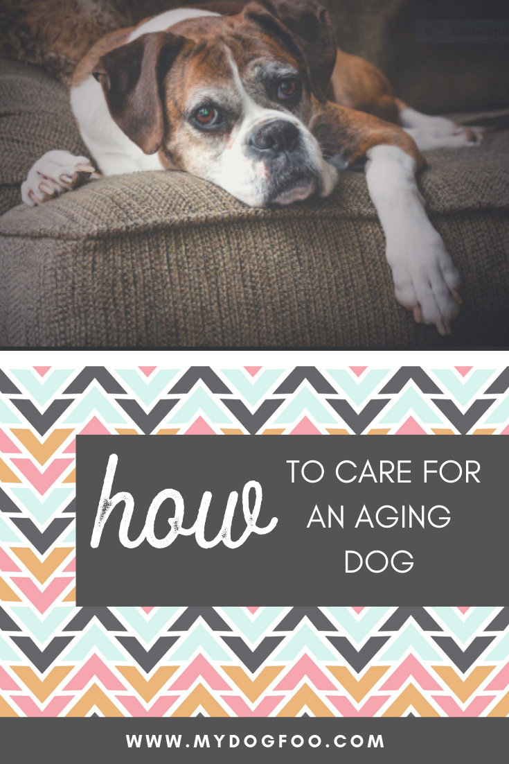 5 Ways to Care for an Aging Dog