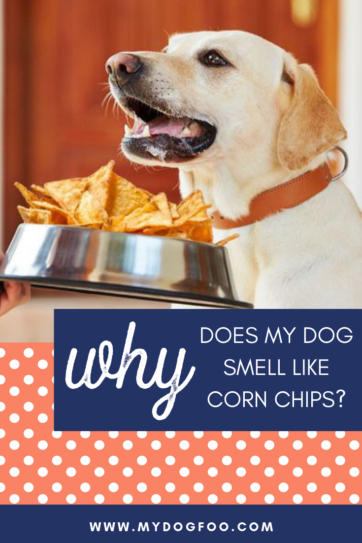 WHY DOES MY DOG SMELL LIKE CORN CHIPS?